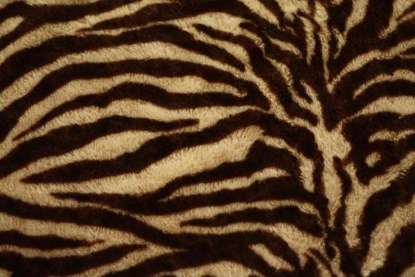 zebra texture by beckas