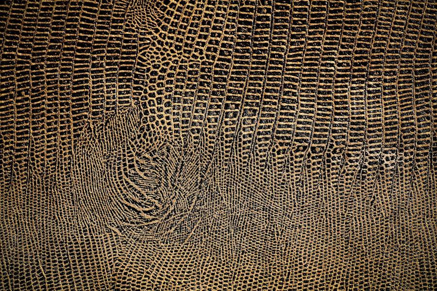snakeskin texture by beckas on DeviantArt
