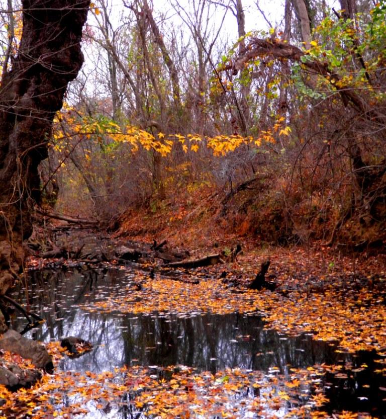 Black water Fall by swordedsaint