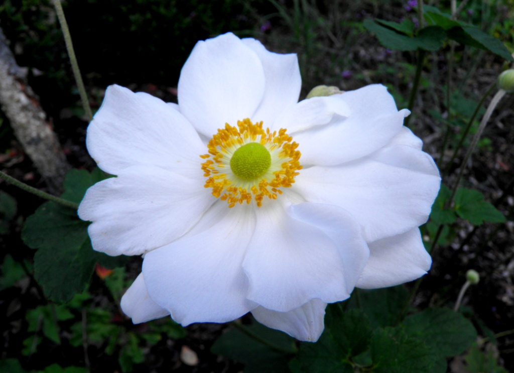 Last Bloom by swordedsaint