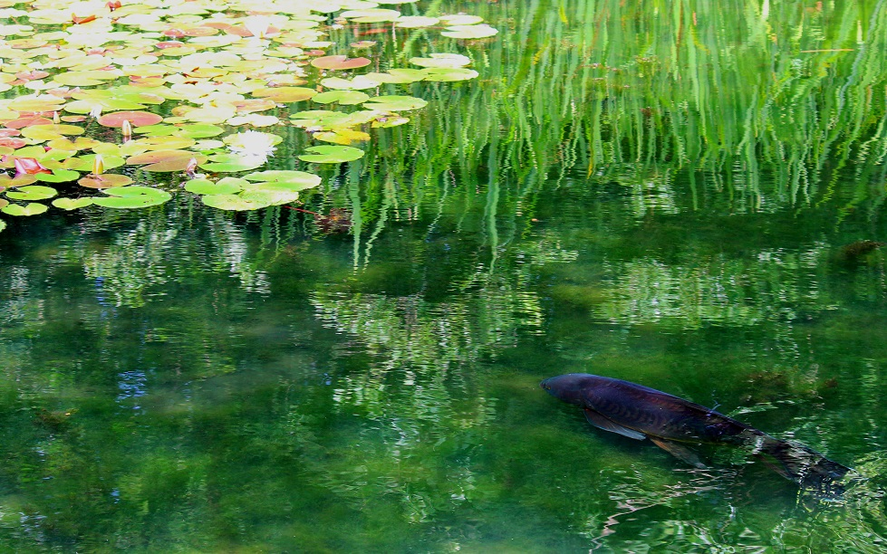 Swimming Thru Monet by swordedsaint