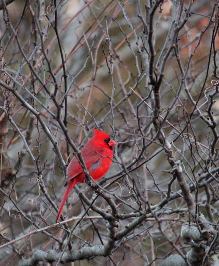Red Hood by swordedsaint