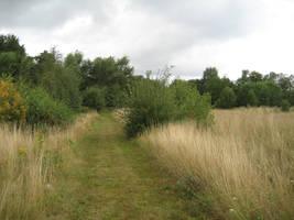 Late summer field by CAStock