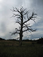 Dead tree by CAStock