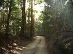 Trail in rainforest