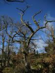 Spooky tree by CAStock