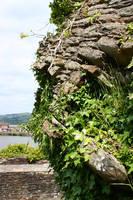 Ivy rock 2 by CAStock