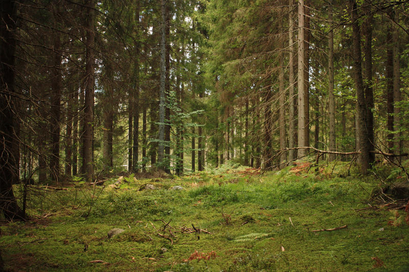 Deep forest by CAStock