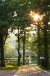 Oak tree serenity