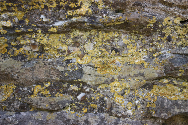 Mossy rock by CAStock