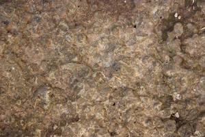 Texture - Organic by CAStock