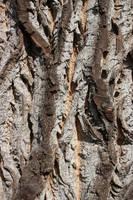 Texture - Bark by CAStock
