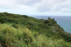 Wild grass by CAStock