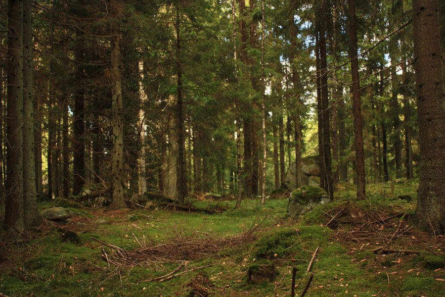 Dark forest by CAStock on DeviantArt