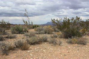 Dryland 2 by CAStock