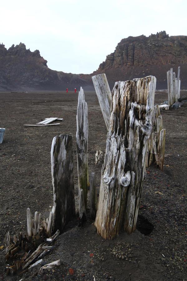 Deception Island wood by CAStock