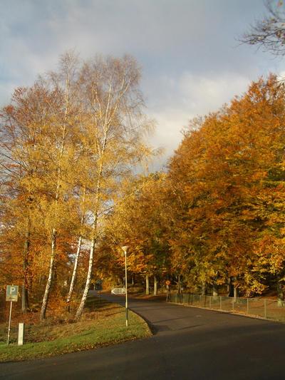 Road In Orange by CAStock