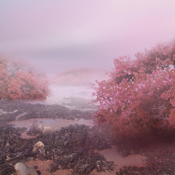 Pink Beach by CAStock