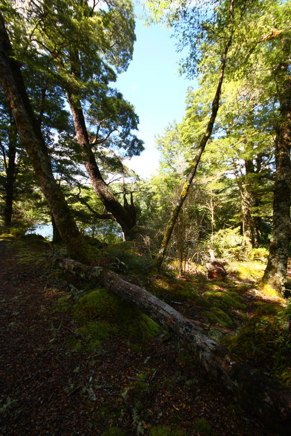 Forest 3 by CAStock