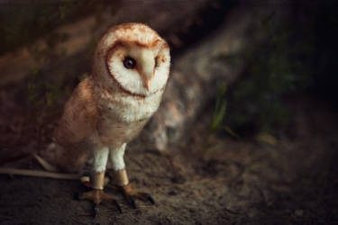 Barn owl Chloe by Irentoys