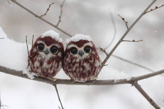 Brooch Owlet