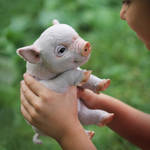MiniPig [stuffed toy]