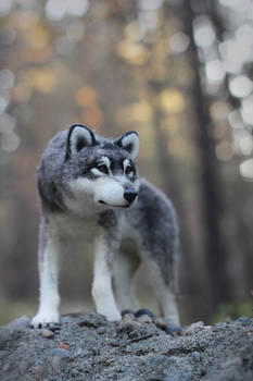 The wolf [felted toy]