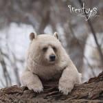 Stepan the bear [stuffed toy]