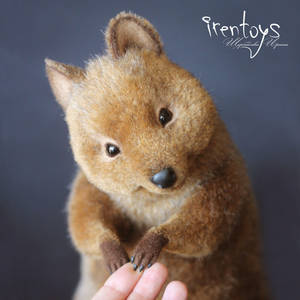 The Quokka [stuffed toy]