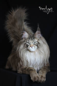 Maine coon [Stuffed toy]