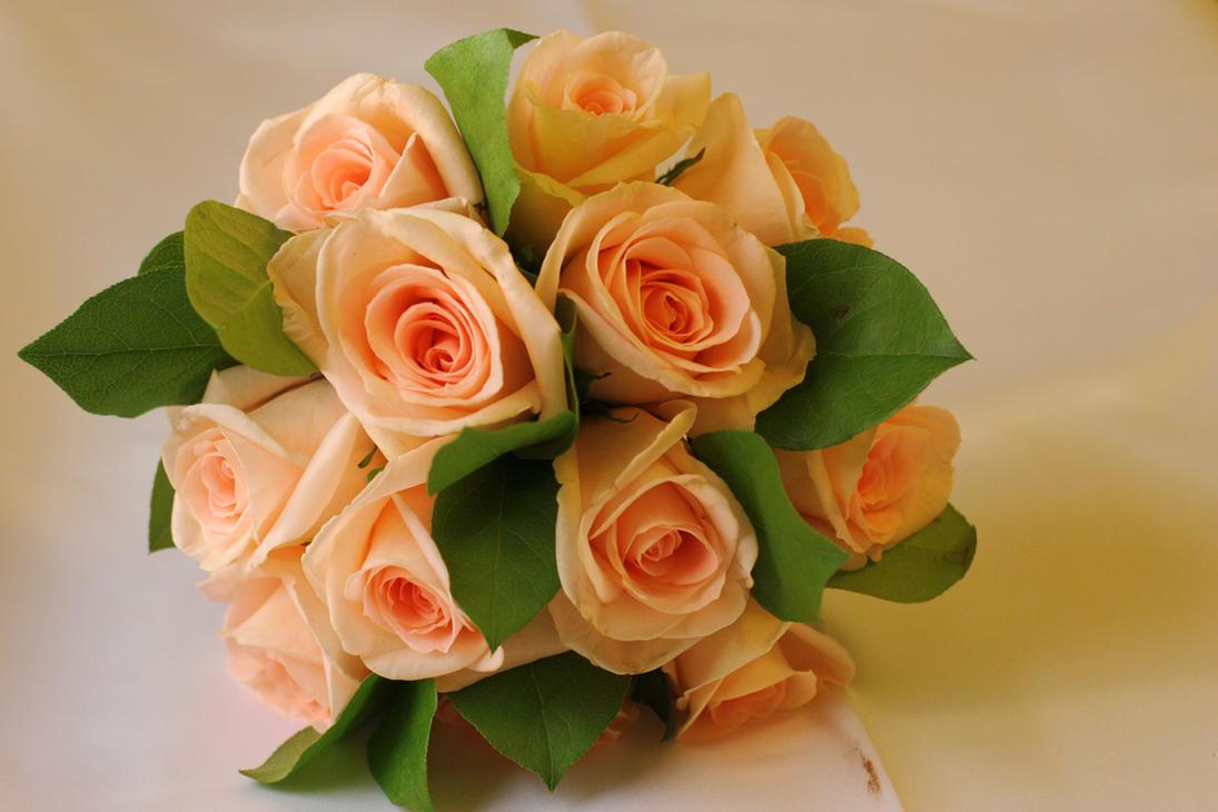 Peach roses by moonberry on deviantart - Peach rose wallpaper ...