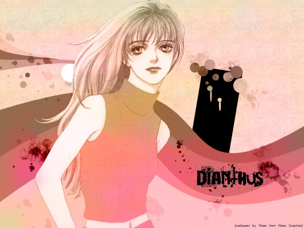 Dianthus by nisec