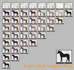 Black Horse Genes