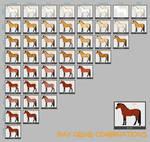 Bay Horse Genes