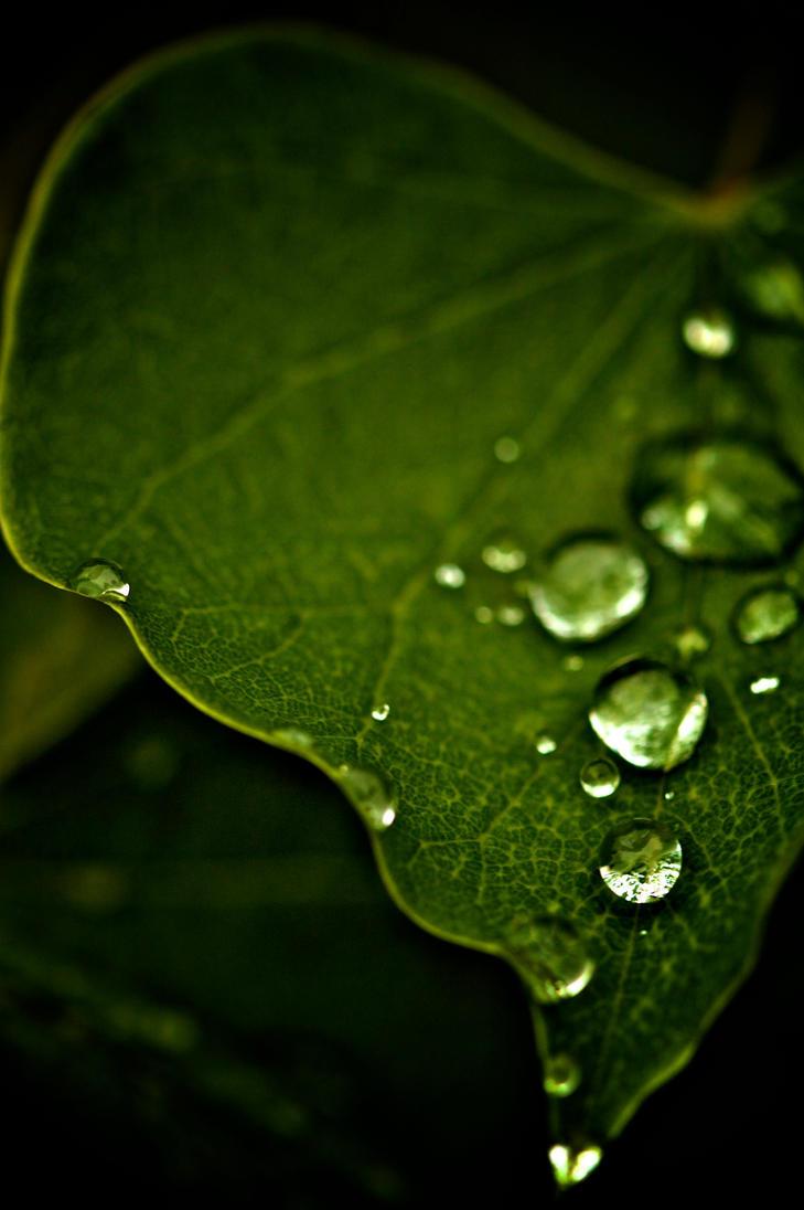 Precious Rain ' by AlwaysConfused89