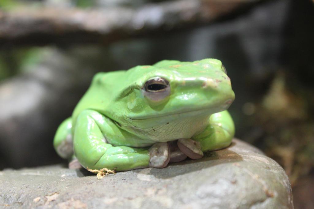 Happy Frog by maakurinohime
