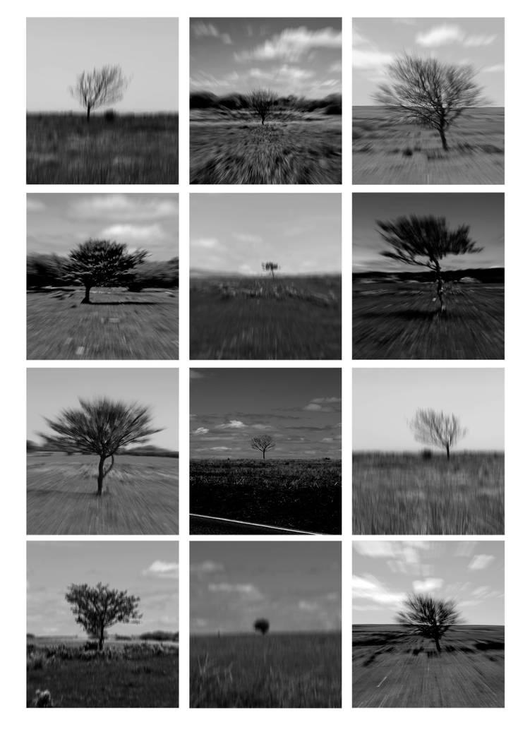 Do trees move?