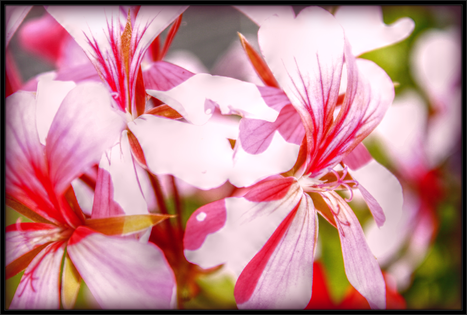 Pink Flowers by DanielHauck