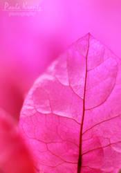 Pink by Thilu