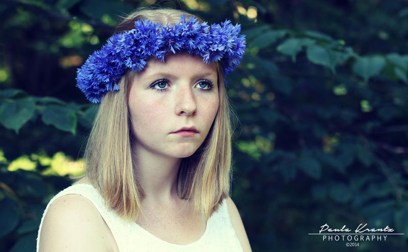 Cornflowers by Thilu
