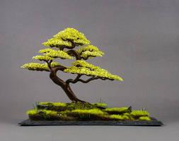 Wire Bonsai Tree Sculpture made by Steve Bowen