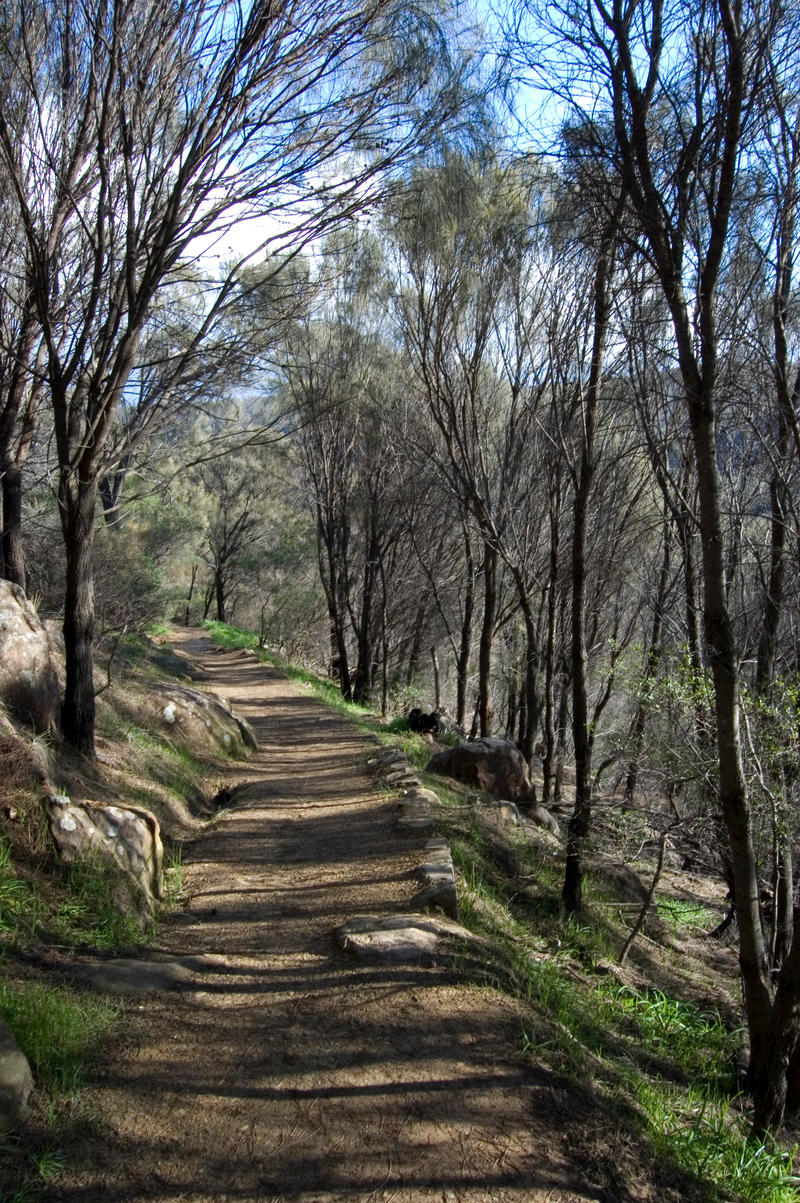 "Shady Path I ""Port"" by DruidWuStock"