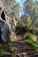 Shady Path Stair II by DruidWuStock