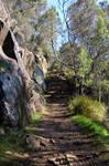Shady Path Stair II