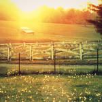 The Barn by RunBrightStar