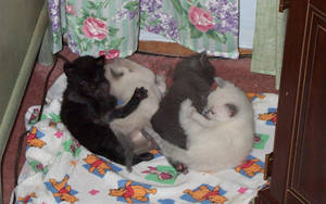 Kittens by ogreman90