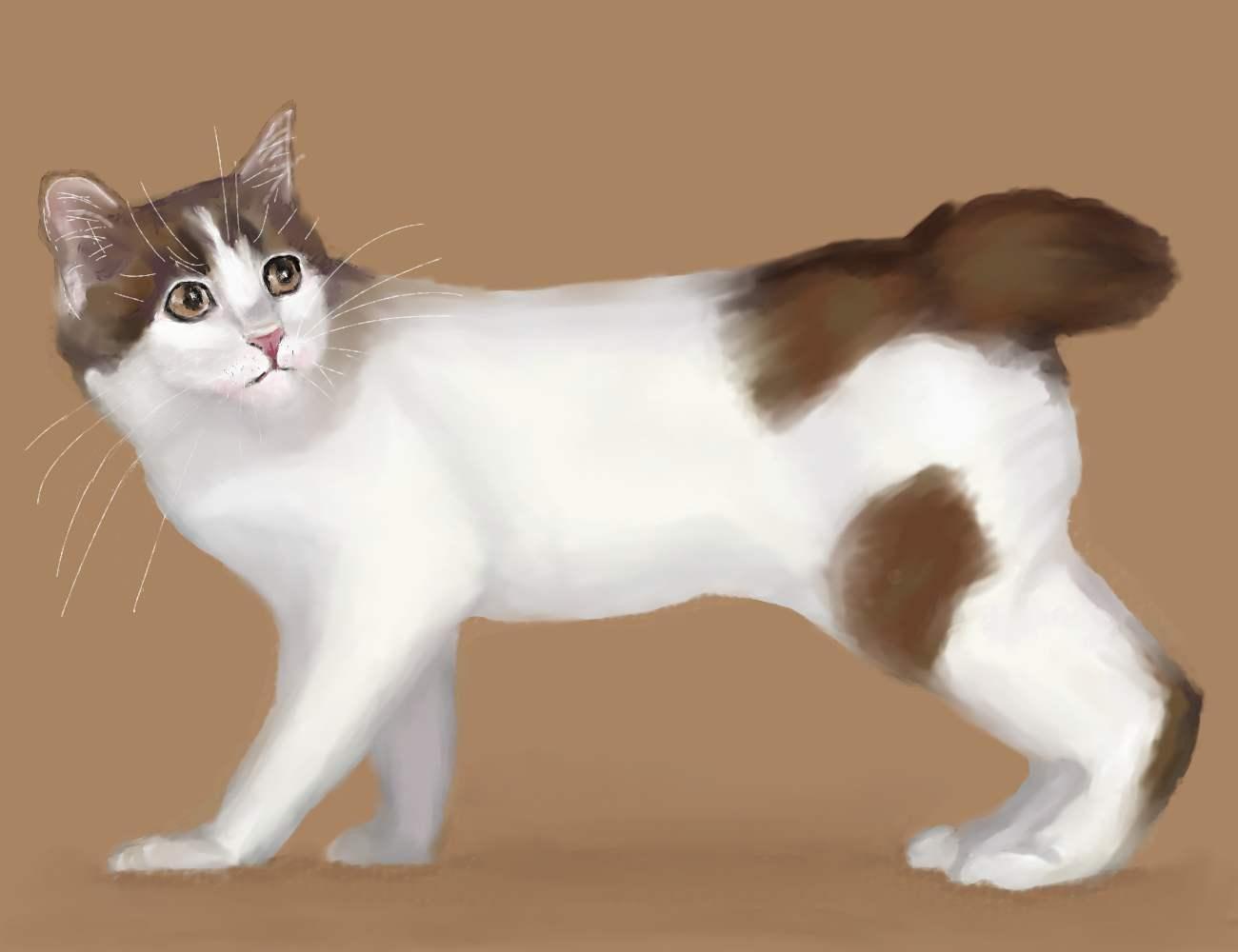 Japanese Bobtail Catty by Patternintheivy on DeviantArt