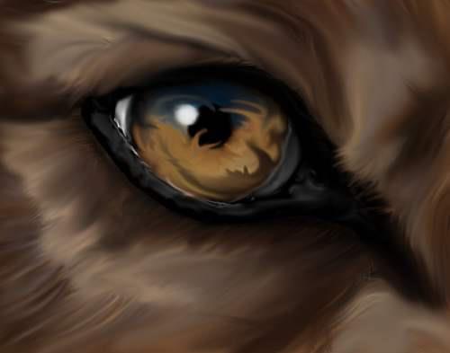 Wolf Eye by Senasame