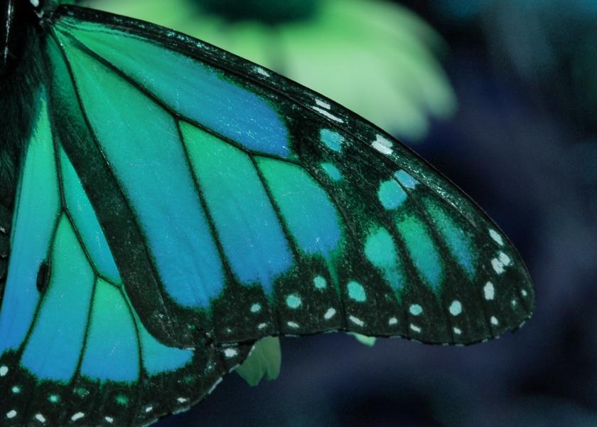 Oceanic Wings by silverz777