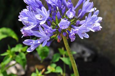 Flower {//}